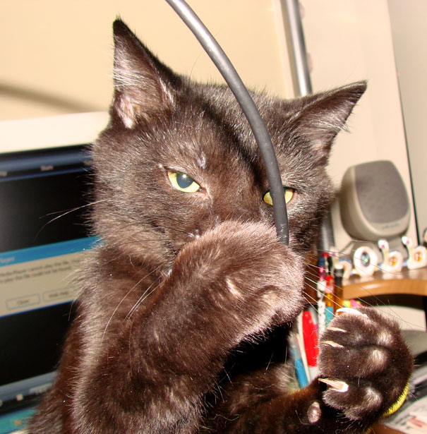 5 Feline-themed Games
