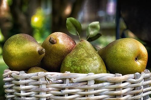 CSA Pears